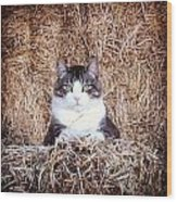 Giant The Handsome Cat Wood Print