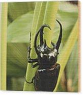 Giant Three-horned Beetle Wood Print