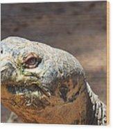 Giant Tortoise Wood Print