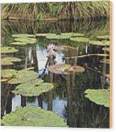 Giant Water Lilies Wood Print