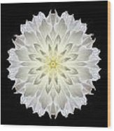 Giant White Dahlia Flower Mandala Wood Print by David J Bookbinder