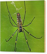 Giant Wood Orb Spider Wood Print by Robert Jensen