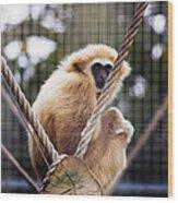 Gibbon On A Swing Wood Print