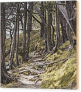 Gibraltar Rock Trail Wisconsin Wood Print