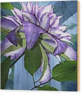 Gift Of Clematis Wood Print