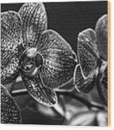 Gift Of Flowers Wood Print