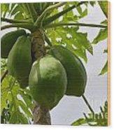 Gigantic Papaya Wood Print