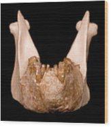 Gigantopithecus Model Jaw Wood Print
