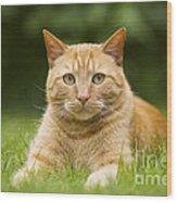 Ginger Cat In Garden Wood Print