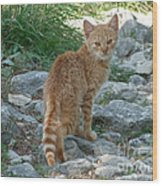 Ginger Cat  Wood Print