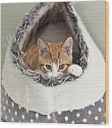 Ginger Kitten In An Igloo Wood Print