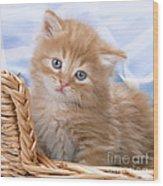 Ginger Kitten In Basket Wood Print