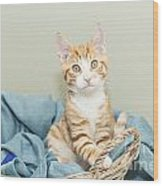 Ginger Kitten Standing In A Basket Wood Print