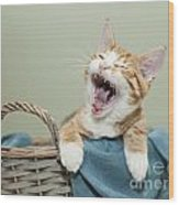 Ginger Kitten Yawning Wood Print