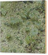 Ginger Moss Carpet Wood Print
