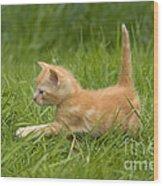 Ginger Tabby Kitten Wood Print