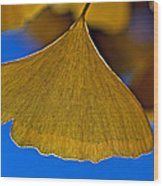 Gingko Leaf Losing Chlorophyll Wood Print