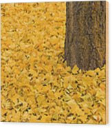Ginkgo Bliss  2 Wood Print