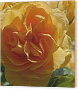 Ginny's Rose In The Sun Wood Print