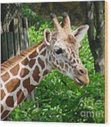 Giraffe-09034 Wood Print