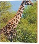 Giraffe Among Trees. Safari In Serengeti. Tanzania Wood Print