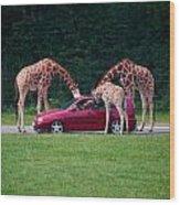 Giraffe. Animal Studies Wood Print