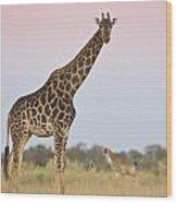 Giraffe At Sunset Wood Print