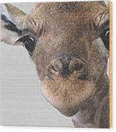 Giraffe Baby Wood Print