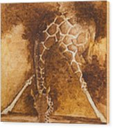 Giraffe Drinking Wood Print by Kim Lagerhem