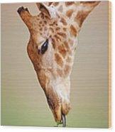 Giraffe Eating Close-up Wood Print