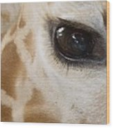 Giraffe Eye Wood Print