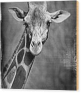 Giraffe Face In Black And White Wood Print