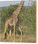 Giraffe From Tanzania Wood Print