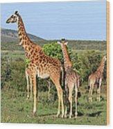 Giraffe Group On The Masai Mara Wood Print