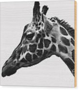 Giraffe Head Shot Wood Print