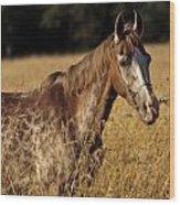 Giraffe Horse Wood Print