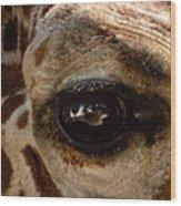 Giraffe Look Into My Eye Wood Print