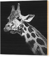 Portrait Of Giraffe In Black And White Wood Print