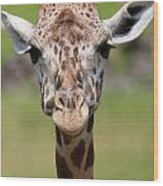 Giraffe Peek A Boo Poster Wood Print