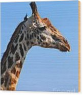 Giraffe Portrait Close-up. Safari In Serengeti. Tanzania Wood Print