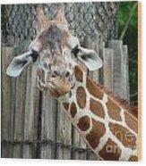 Giraffe-really-09025 Wood Print