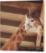 Giraffe Smarty Wood Print