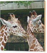 Giraffes-09023 Wood Print