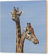 Giraffes 1 Wood Print
