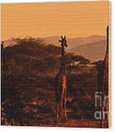 Giraffes At Sundown Wood Print