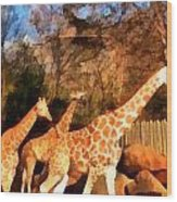 Giraffes At The Zoo Wood Print