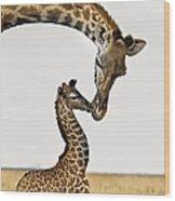 Giraffe's First Kiss Wood Print