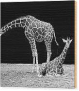 Giraffe's Wood Print