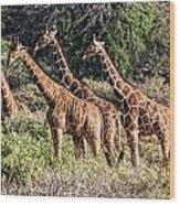 Giraffes Galore Wood Print