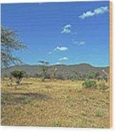 Giraffes In Samburu National Reserve Wood Print
